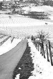 Trayectoria abajo de los viñedos nevosos del invierno Foto blanco y negro de Pekín, China Foto de archivo