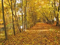 Trayectoria agradable cerca del río y de árboles coloridos del otoño Imagen de archivo libre de regalías