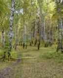 Trayectoria al horizonte en el bosque del otoño Foto de archivo libre de regalías