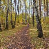 Trayectoria al horizonte en el bosque del otoño Foto de archivo