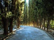 Trayectoria alineada árbol Grenada, España Imagen de archivo