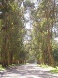 Trayectoria alineada por los árboles Imagen de archivo