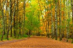 Trayectoria ancha en parque del otoño Imágenes de archivo libres de regalías