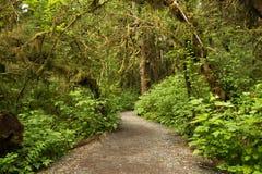 Trayectoria ancha que lleva en selva tropical en el bosque del Estado de Tongass, Alaska foto de archivo libre de regalías