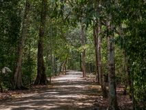 Trayectoria antigua a través de la selva mexicana en Calakmul imágenes de archivo libres de regalías