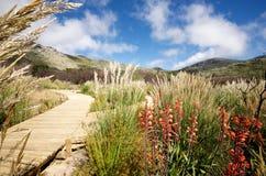 Trayectoria Cape Town de la naturaleza Foto de archivo