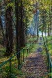 Trayectoria cercada con barandilla en el bosque siberiano Fotos de archivo libres de regalías