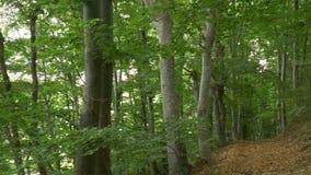 Trayectoria con las hojas en el bosque metrajes