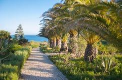 Trayectoria con las palmas en un centro turístico mediterráneo Foto de archivo libre de regalías