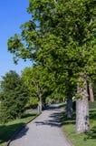 Trayectoria con los árboles verdes contra el cielo azul Imagen de archivo