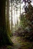 Trayectoria cubierta de musgo en Hakone, Japón Fotografía de archivo
