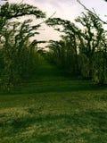 Trayectoria de árboles en caída foto de archivo