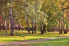 Trayectoria de asfalto en parque entre árboles de abedul e hierba verde Fotografía de archivo