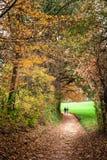 Trayectoria de Autumn Park fotografía de archivo libre de regalías