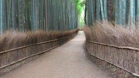 Trayectoria de bambú foto de archivo libre de regalías