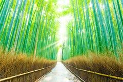 Trayectoria de bambú H de Forest Beams God Rays Straight del árbol fotos de archivo
