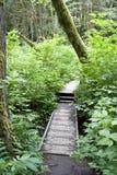 Trayectoria de bosque fotos de archivo