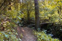 Trayectoria de bosque con el pequeño puente sobre la cala de Dubina en montañas centrales checas por la tarde del sommer Fotos de archivo libres de regalías