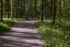 Trayectoria de bosque con los wildflowers Imagen de archivo