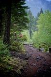 Trayectoria de bosque con rododendros Foto de archivo libre de regalías