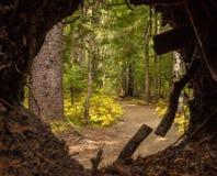 Trayectoria de bosque con una abertura circular Imagen de archivo libre de regalías