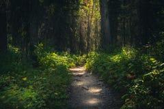 Trayectoria de bosque dappled con luz del sol imagen de archivo libre de regalías