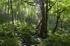 Trayectoria de bosque de la montaña Foto de archivo