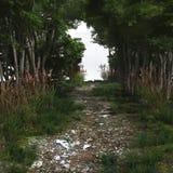 Trayectoria de bosque de Pebbled Imagen de archivo libre de regalías