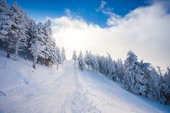 Trayectoria de bosque del esquí con los árboles de pino cubiertos en nieve Imagen de archivo