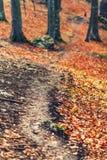 Trayectoria de bosque del otoño Fotos de archivo