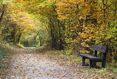 Trayectoria de bosque del otoño con el banco Imágenes de archivo libres de regalías
