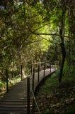 Trayectoria de bosque del parque nacional de Tsitsikamma, ruta del jardín, Suráfrica Imágenes de archivo libres de regalías