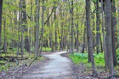 Trayectoria de bosque del tiempo de primavera en la montaña fotos de archivo