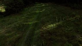 Trayectoria de bosque, el vuelo de un abejón sobre el bosque almacen de video