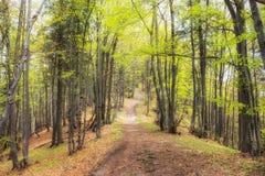 Trayectoria de bosque en bosque Imagenes de archivo