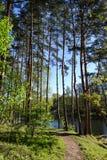 Trayectoria de bosque en el bosque cerca del río Primavera Mañana Sombras de árboles Fotografía de archivo