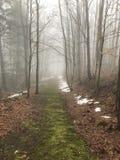 Trayectoria de bosque en invierno Imágenes de archivo libres de regalías