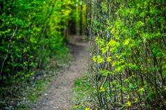 Trayectoria de bosque en primavera Foto de archivo