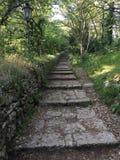 Trayectoria de bosque en San Marino Imágenes de archivo libres de regalías