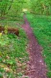 Trayectoria de bosque entre los árboles en verano, trayectoria en bosque verde en primavera Imagen de archivo libre de regalías