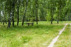 Trayectoria de bosque a la arboleda del abedul del verano con una tabla de madera Imágenes de archivo libres de regalías