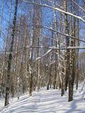 Trayectoria de bosque rusa Fotos de archivo libres de regalías