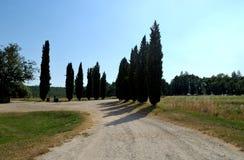 Trayectoria de Cypress en el campo toscano cerca de Siena Italy Foto de archivo libre de regalías