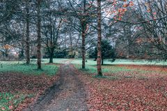 Trayectoria de Dirth en el bosque Fotografía de archivo libre de regalías