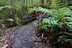 Trayectoria de Forrest Walking de la lluvia fotografía de archivo libre de regalías