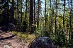Trayectoria de la bobina del bosque de Finlandia a través del follaje enorme Fotografía de archivo