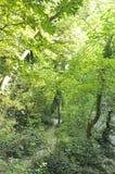 Trayectoria de la cascada de Hotnitsa de la provincia de Veliko Tarnovo en Bulgaria Foto de archivo libre de regalías