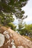 Trayectoria de la grava en bosque cerca del mar adriático Imagen de archivo