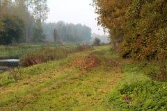 Trayectoria de la hierba del bosque Imagen de archivo libre de regalías