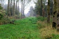 Trayectoria de la hierba del bosque Fotos de archivo libres de regalías
